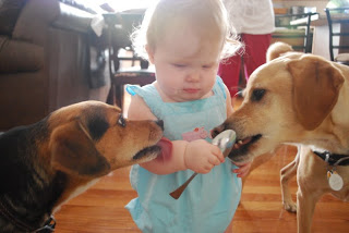 toddler girl holding spoon with two dogs licking the spoon