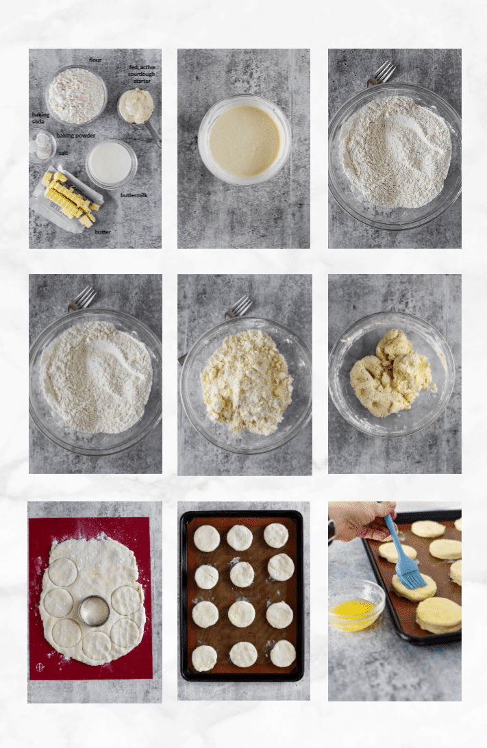 collage of images showing steps to make sourdough biscuits