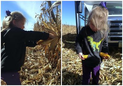 a little girl picking corn