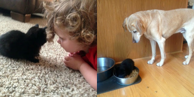 images of tiny kitten with toddler girl and dog bowl of food